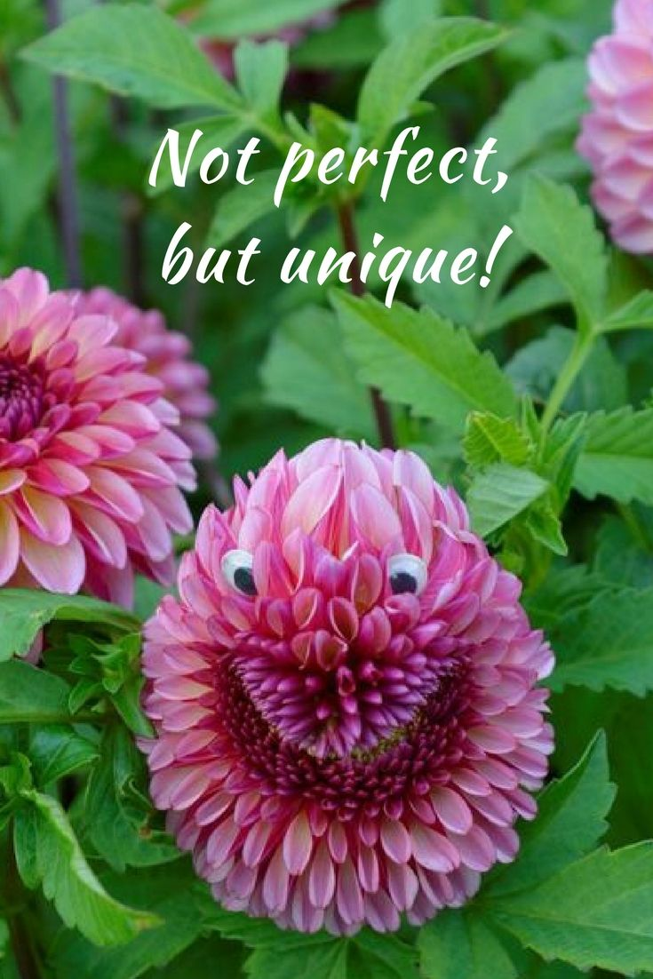 15 best flower garden quotes images on pinterest love this little fellow we found in our flowerfields this summer he was caught by izmirmasajfo