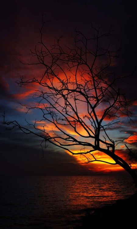 Dead tree in the sunset | See More Pictures | #SeeMorePictures
