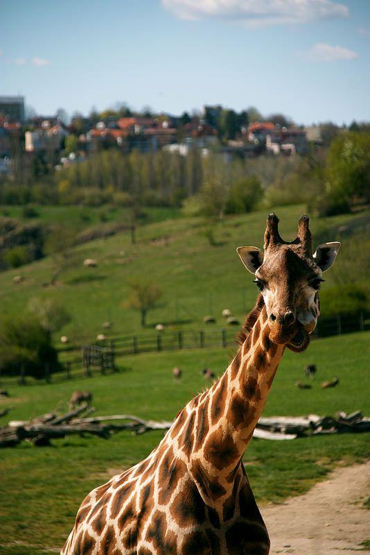 Prague Zoo