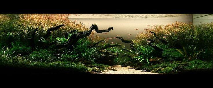 acvariu.ro - IAPLC2009