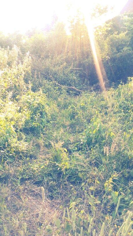 Love the low sun @ my backyard