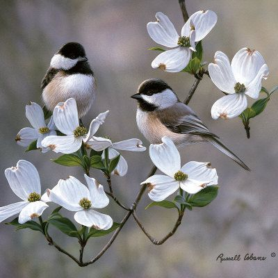 Chickadees and dogwood trees. This reminds me of a precious lad I knew, her favorite bird, Black capped Chickadee. Miss her so.