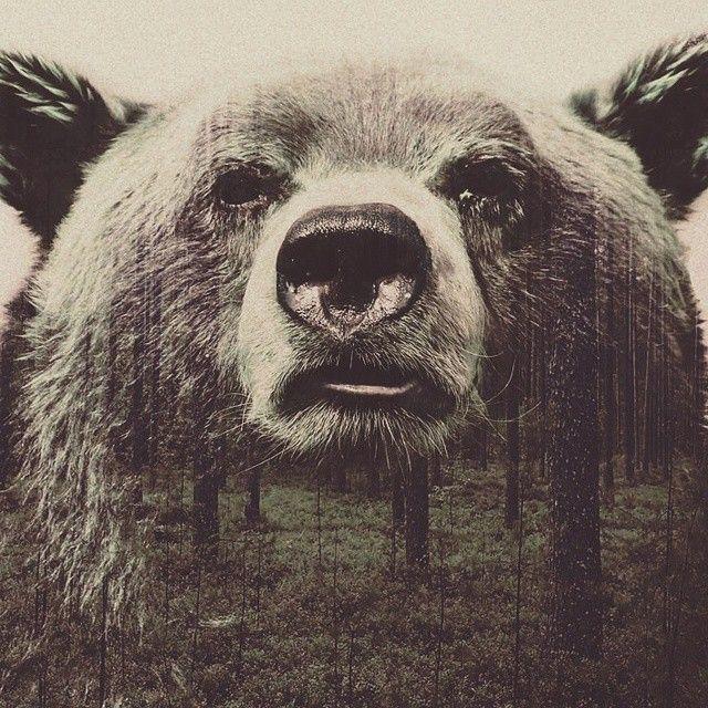 #art #bear #animal
