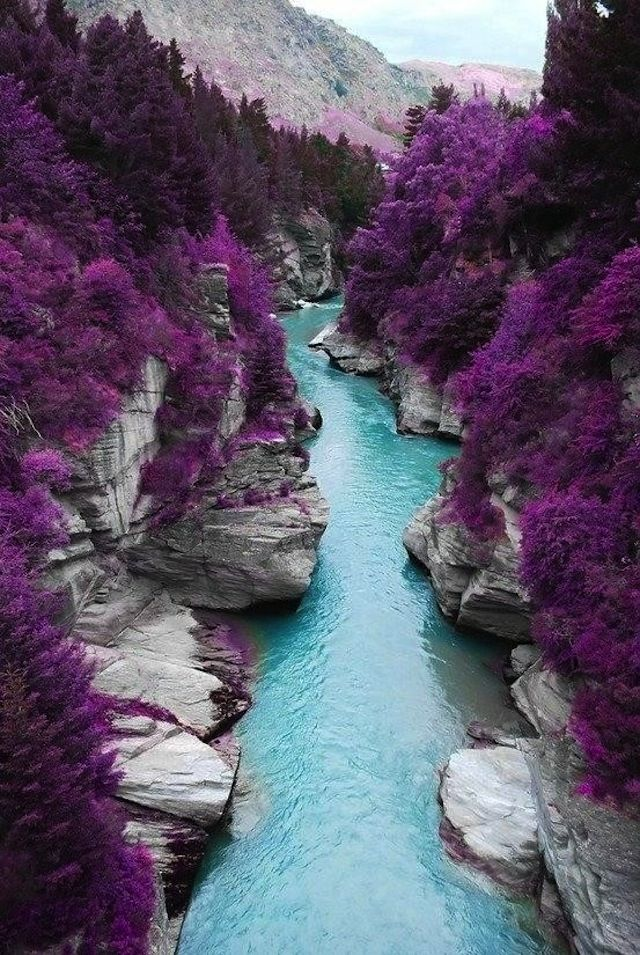 In the south of the Isle of Skye, in Scotland, you can find these magnificent Fairy Pools. With a beautiful hiking trail especially in the fall. Turquoise rivers with purple trees on the side make for a stunning view..