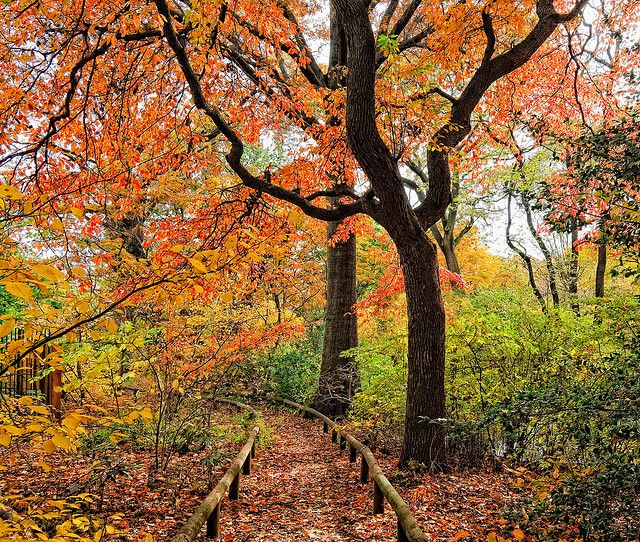 30 Best Brooklyn Botanical Garden Images On Pinterest 400 x 300
