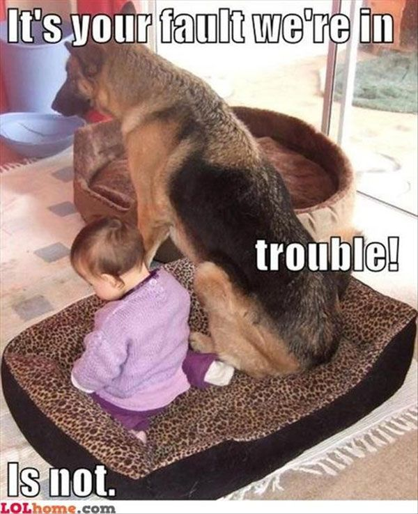 Funny Pictures Of Animals | Fun Claw: Funny Pictures Of Dogs