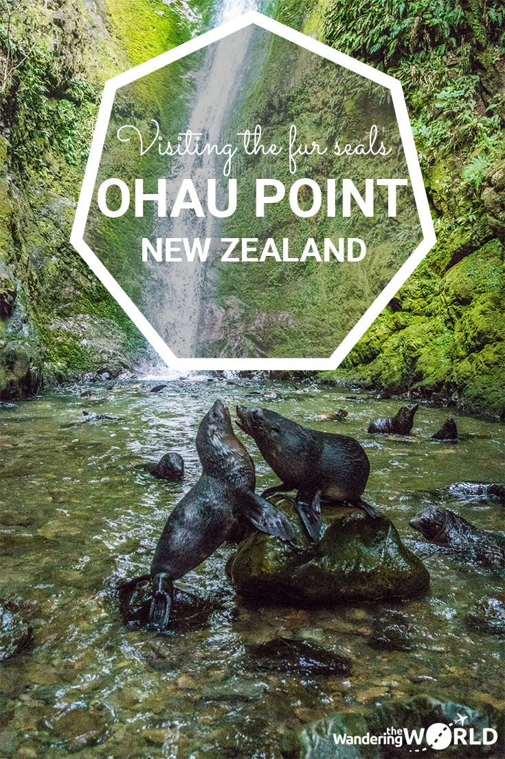 Visiting the Ohau Point Fur Seal Colony near Kaikoura, New Zealand - Wandering the World