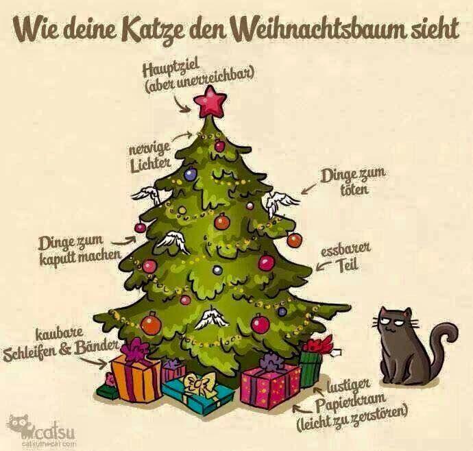 funpot: Katze und Weihnachtsbaum.jpg von Fabi