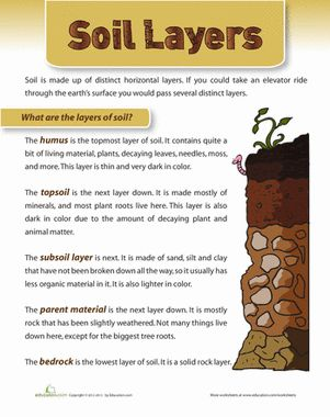 Take a look into the layers of the earth with this soil science sheet! Your little digger can learn about the different soil layers and what lives in each one.