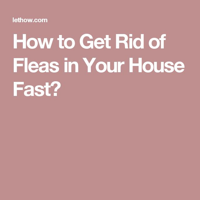 how to get rid of fleas in your house fast and naturally. Black Bedroom Furniture Sets. Home Design Ideas