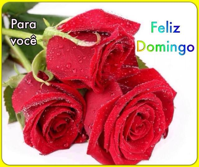Rosas para você, neste domingo que será repleto de Felicidade.  Acesse a mensagem de bom dia.