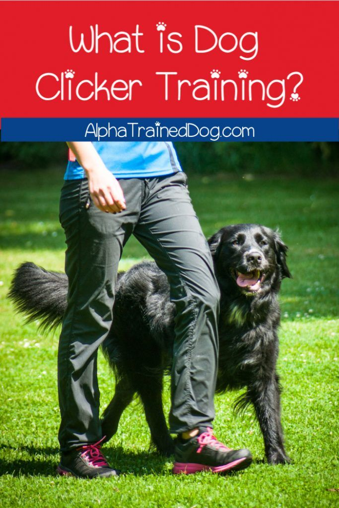 If You Re New To Dog Clicker Training Get Ready For The Complete