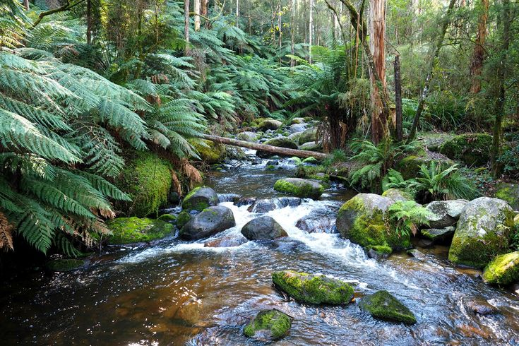 Discover Toorongo Falls & Amphitheatre Falls en-route a beautiful circuit walk through thick native bush. See our photos & learn more about the walk here...