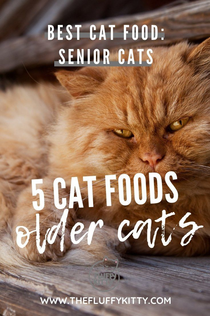 5 Cat Foods For Senior Aging Cats Cats Seniorcats Oldcats Catfood Guide By Fluffy Kitty Www Th In 2020 Senior Cat Care Cat Food Senior Cat Food