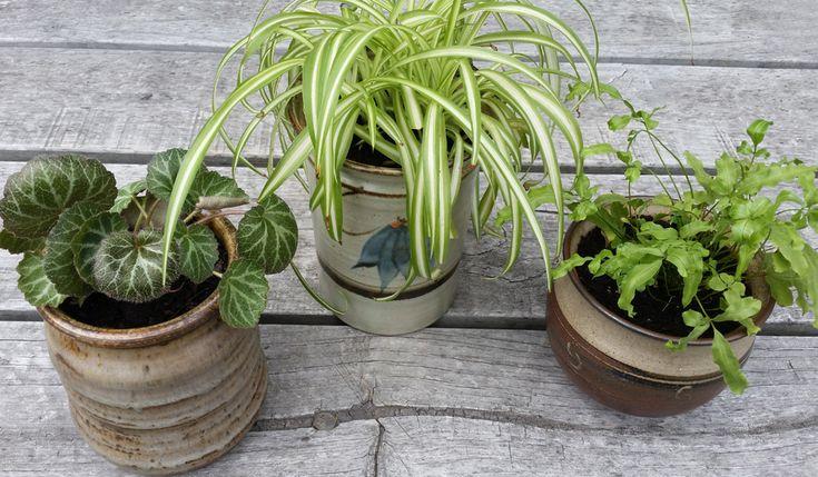 DIY PROJECT | Upcycled Ceramic Jars to Plant Pots - threadbarecloakthreadbarecloak