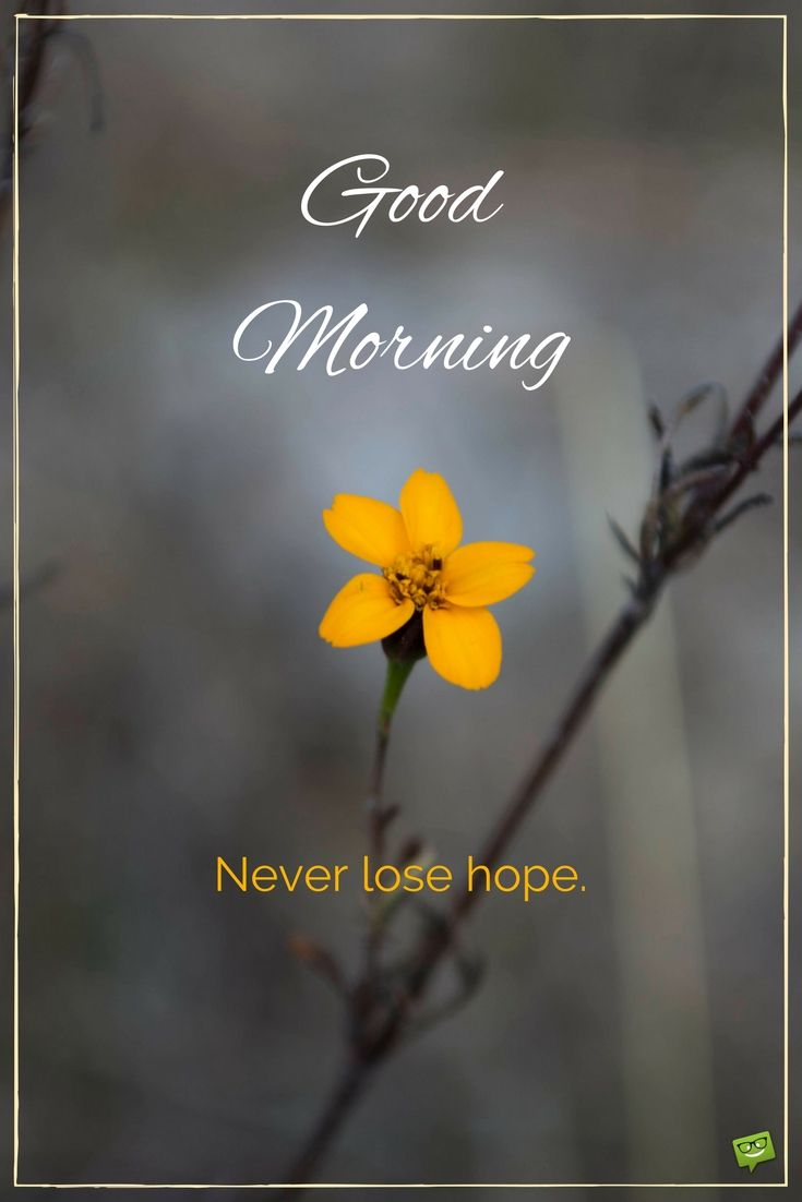 Quotes On Morning Wishes: Best 25+ Good Morning Ideas Only On Pinterest
