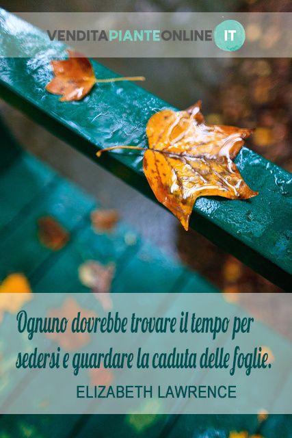 """""""Ognuno dovrebbe trovare il tempo per sedersi e guardare la caduta delle foglie."""" ELIZABETH LAWRENCE"""