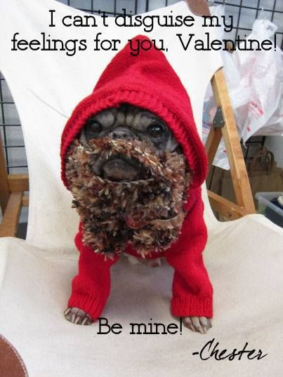 pug in disguise