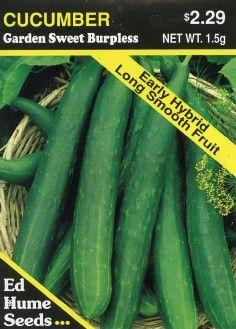 Garden Sweet Burpless Cucumber