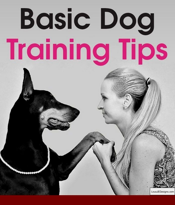 Lucky Dog Ranch Training Tips And Pics Of How Do You Train Your
