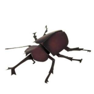 Käfer,Wissenschaft,Papiermodelle,Asien / Ozeanien,Japan,braun,Insekten,einfach