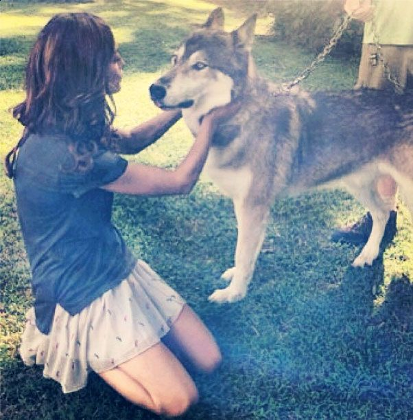 Originals Star Phoebe Tonkin Cozies Up to a Wolf — Cute Pic of the Day!