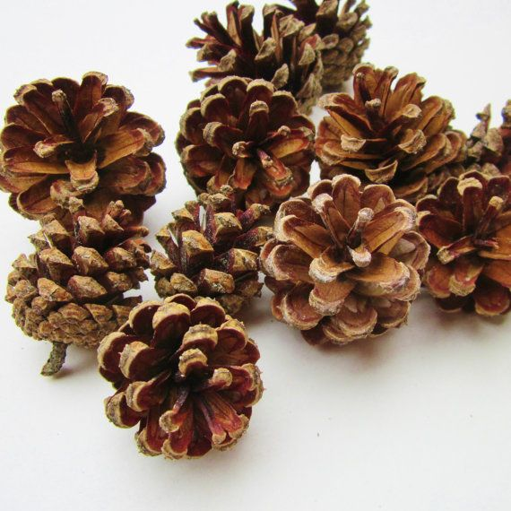 Pine Cones, Red Pine, NH Pine, Small Pine Cones, Nature Crafts, Craft Supplies, Christmas Ornaments, Rustic Decor, Fairy House, Pet Chews