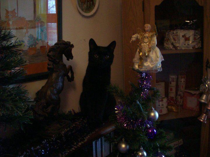 Oscar at Christmas