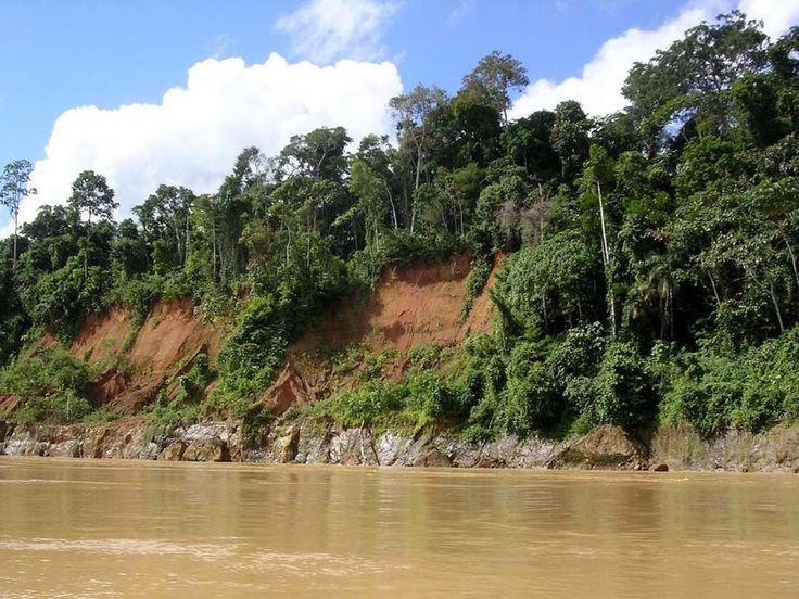 Amazon Rainforest Climate Change Guide
