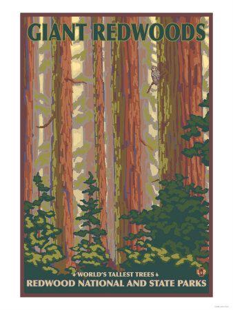 Giant Redwoods, Redwood National Park, CaliforniaVintage Posters, Giants Redwood, National Forest, State Parks, States Parks, Big Sur, Art Prints, National Parks, Travel Posters