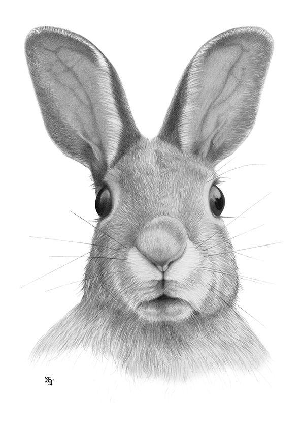 Bleistiftzeichnung Hase Kopf 1 DIN A4 von Josef Hinterseer ...