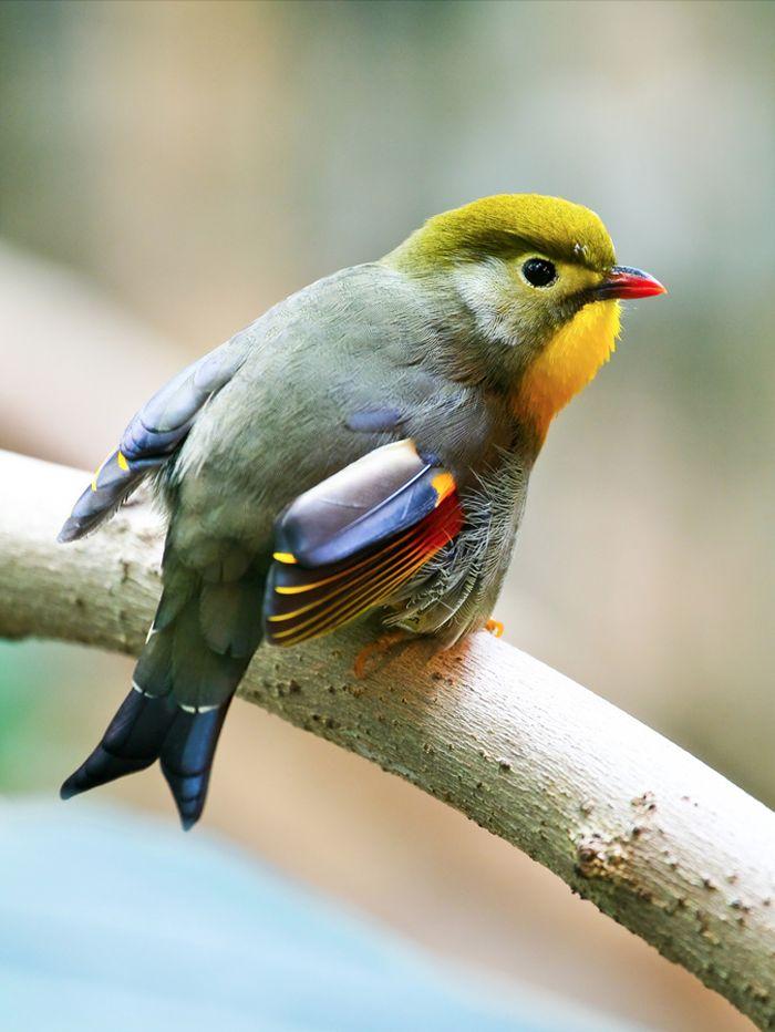 spring bird on a - photo #22
