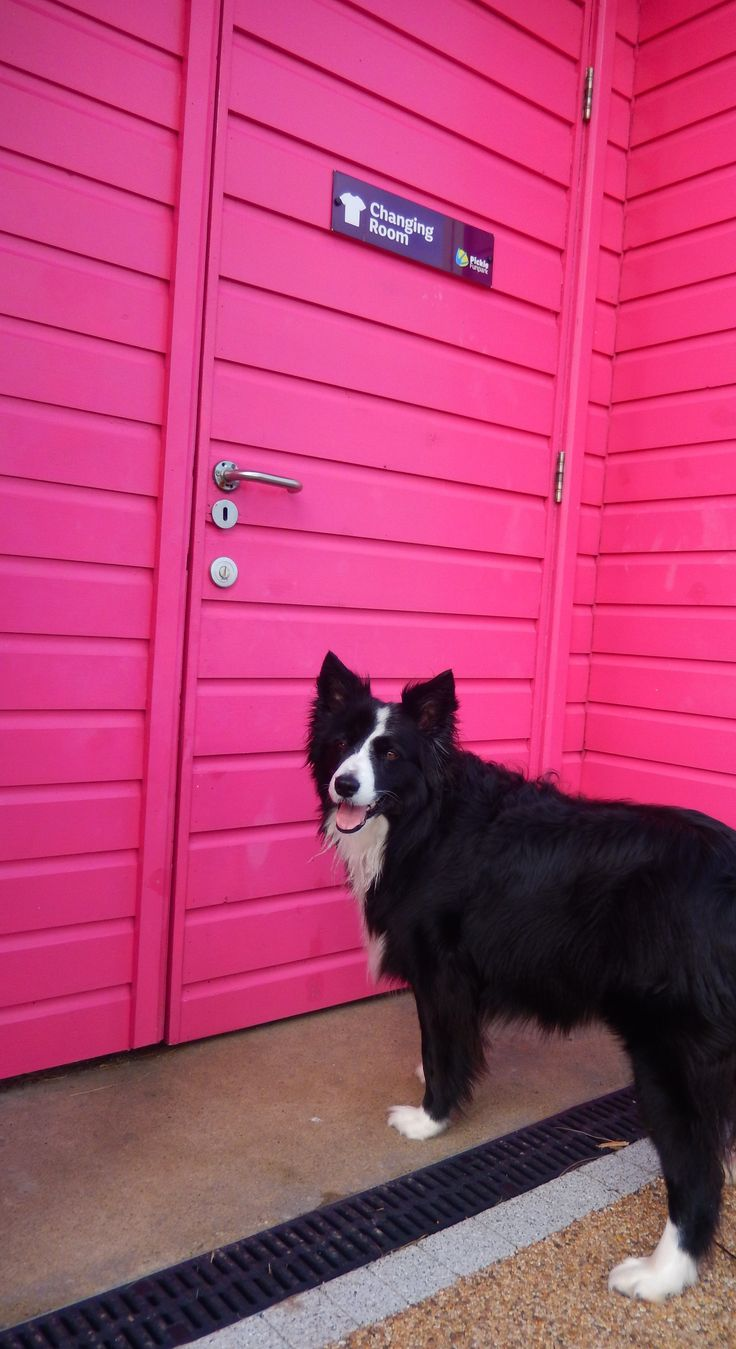 """""""Connie...Hope this is the right one now for us girls to use...I don't want to be in the Dog house again by going into the Boy's changing Hut..."""" says Asha the border collie at the changing rooms at Pickie Fun Park Bangor, Northern Ireland."""