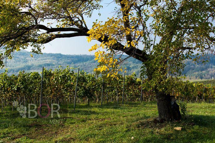 Barokk borbarangolás: Háromnapos boros program az Egri borvidéken Noszvaj itt: Heves megye