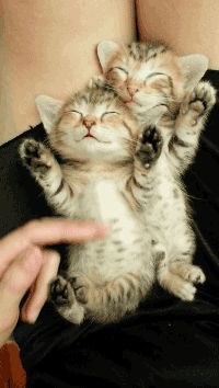 Share this Double sweet kittens Animated GIF with everyone. Gif4Share is best source of Funny GIFs, Cats GIFs, Reactions GIFs to Share on social networks and chat.