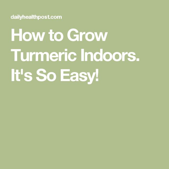 How to Grow Turmeric Indoors. It's So Easy!