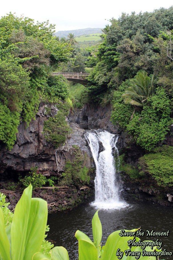 Ohe O Gulch Maui Maui Travel Travel Photography Places To Go