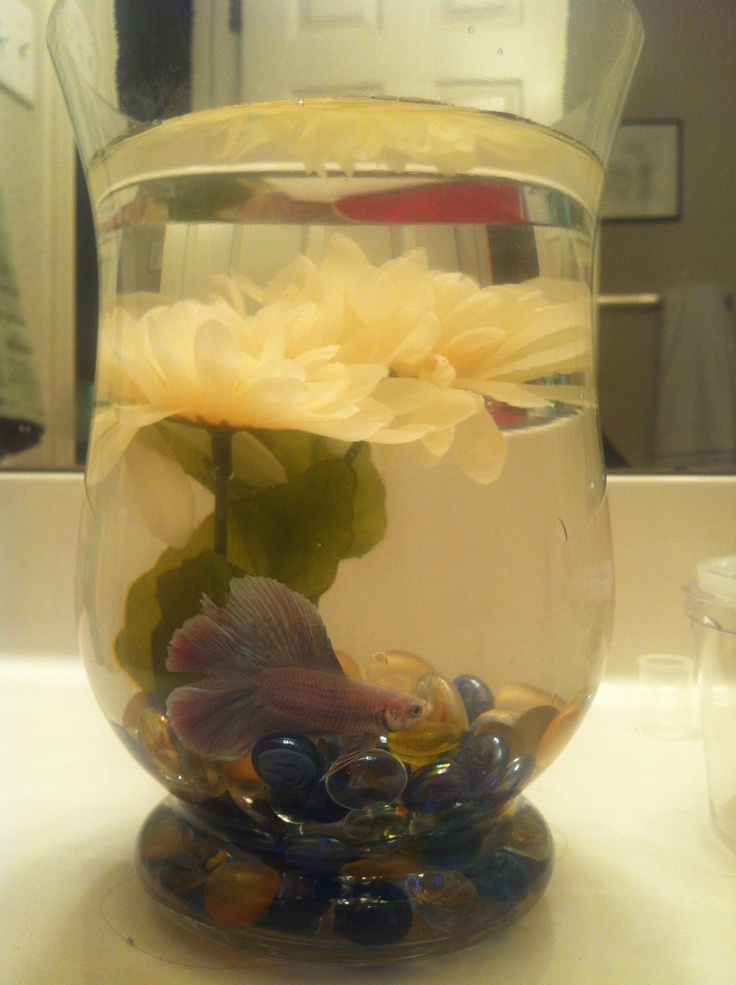 17 best images about my betta on pinterest disney mickey for Betta fish vase