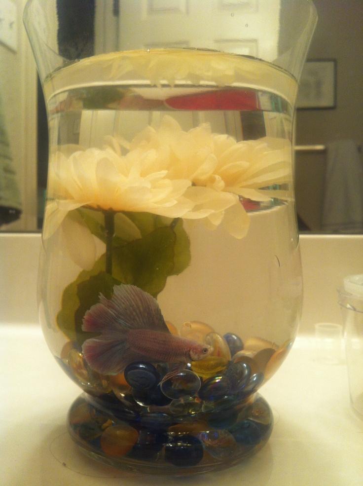 17 best images about my betta on pinterest disney mickey for Aquarium vase decoration