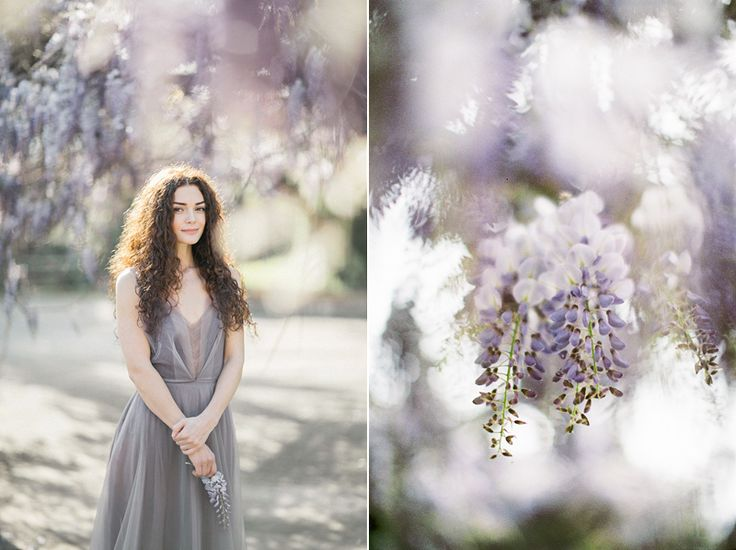 for the love of wisteria 09