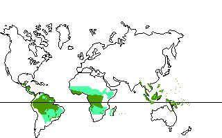 Begeleide of zelfstandige activiteit - Het regenwoud