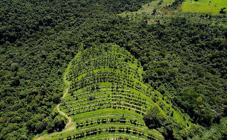 Uma das áreas de agrofloesta da Fazenda da Toca cercada por mata nativa com produção de laranja consorciada com banana, eucalipto, gliricídia, ipê, manga e outras espécies