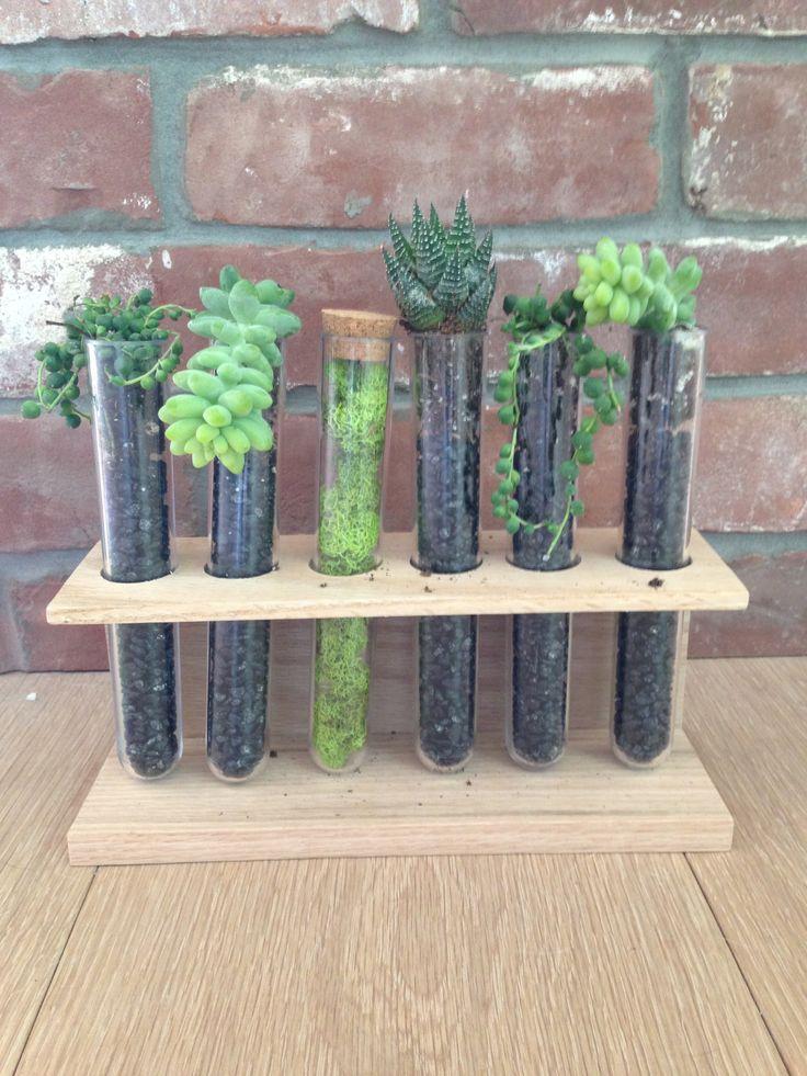 Succulent test tube centerpieces