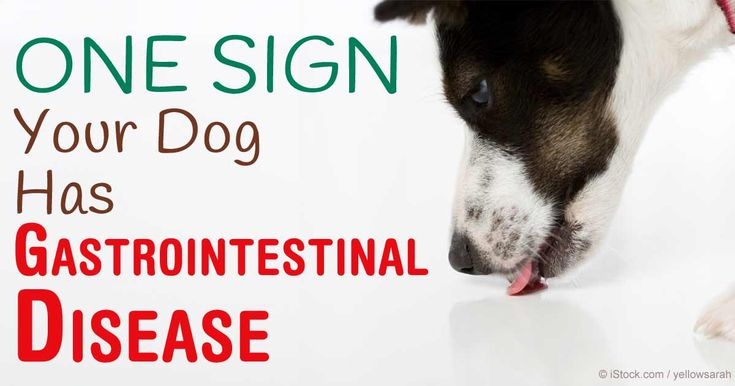 A Canadian study concludes that most dogs with excessive licking of surfaces behavior have a gastrointestinal disease. http://healthypets.mercola.com/sites/healthypets/archive/2016/02/10/excessive-licking-surfaces-dogs.aspx
