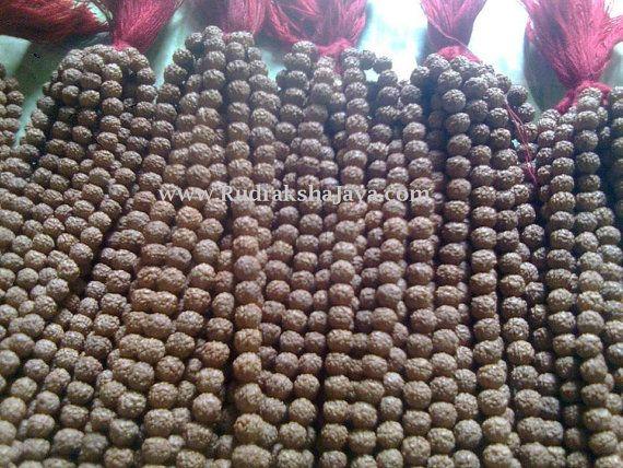 100 pcs Mala Wholesale Lot Rudraksha Rudraksh 108 + 1 Price All $342.44 USD Only. by RudrakshaJava