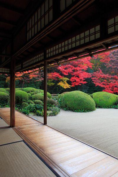 Perfection in minimal gardening. Zen achieved. #Japan #autumn
