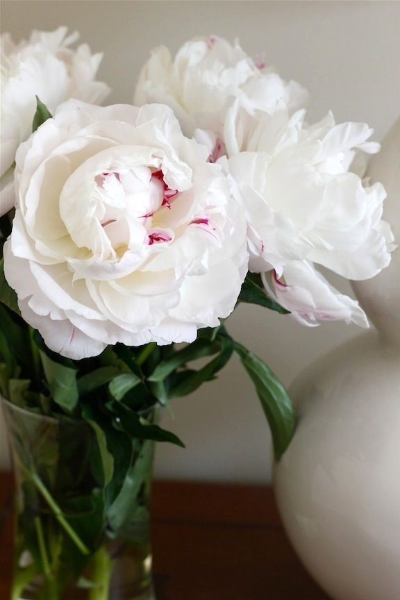 A glass vase of Peony blooms looks stunning in any room of the house.