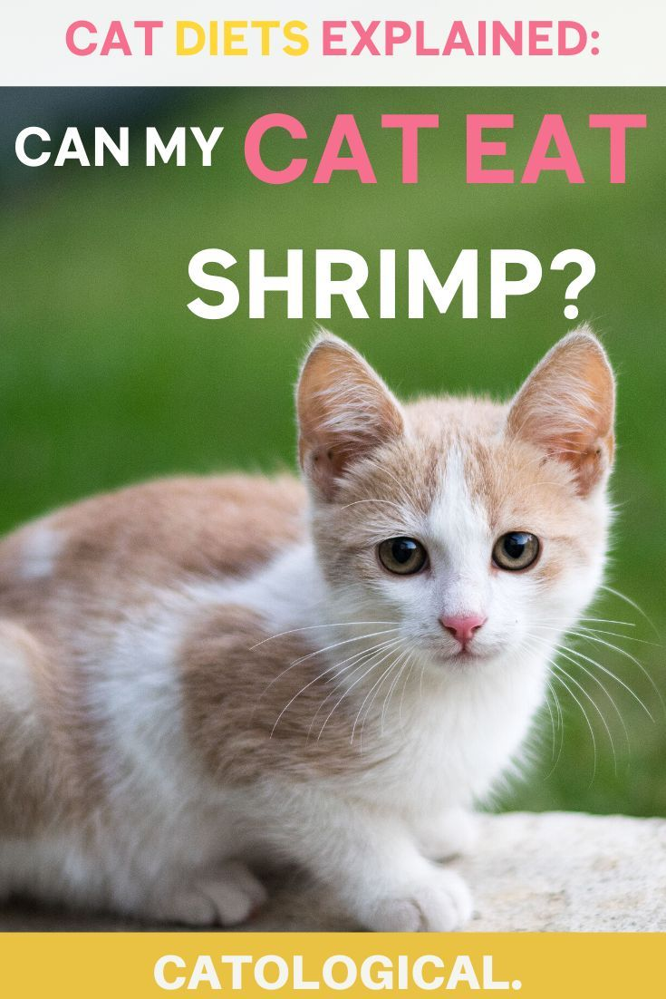 Can Cats Eat Shrimp Or Are They Bad For Them In 2020 Homemade
