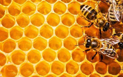 Entdecken Sie, wie Bienenprodukte als Heilmittel aus der Natur auf die Gesundheit wirken. Freuen Sie sich auf Berichte über Propolis, über Blütenpollen, Gelee Royal, ...