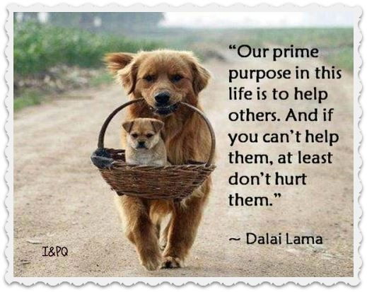 ''Our prime purpose in this life is to help others. And if you can't help them, at least don't hurt them.'' -- Dalai Lama ; source: Inspiring and Positive Quotes